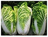 Chinese Cabbage Michihli