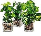 Hinleise Plantas artificiales de imitación de mesa verdes con macetas de cristal transparente de seda en jarrón de vidrio para decoración del hogar (juego de 3)
