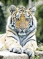 12歳以上の人に適した大人のパズルジグソー500ピース動物休息タイガー