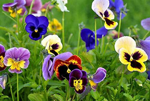 Rompecabezas de 1000 Piezas para niños   Arbusto de orquídeas   Rompecabezas de Juguetes de Madera para Entretenimiento