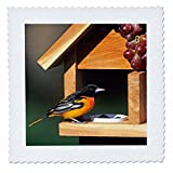 3D Rose Baltimore Oriole Male On Jelly and Grape Feeder Illinois Square 14 by 14 Inch Quilt, 14 x 14