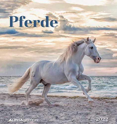 Pferde 2022- Postkarten-Kalender - Kalender-mit-Postkarten - zum-Raustrennen - 16x17