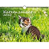 Katzenzauber DIN A4 Kalender 2020 Katzen und Katzenbabys Geschenk-Set: Zusätzlich 1 Gruß- und 1 Weihnachtskarte - Seelenzauber