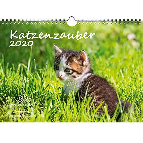 Katzenzauber DIN A4 Kalender 2020 Katzen und Katzenbabys und zusätzlich 1 Geschenkkarte - Seelenzauber