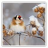 Juego de 2 pegatinas cuadradas de 7,5 cm – Goldfinch pequeño jardín pájaro divertido calcomanías para portátiles, tabletas, equipaje, reserva de chatarras, neveras, regalo genial #45183