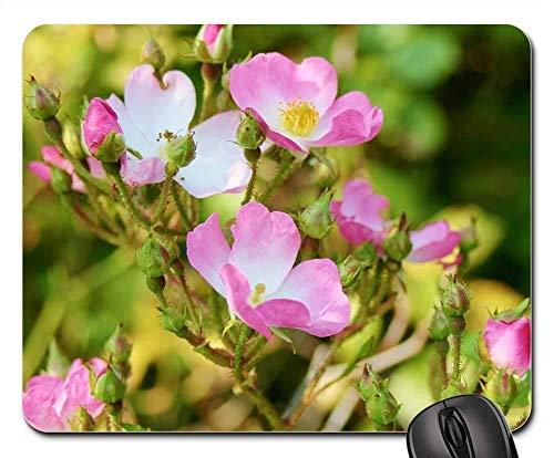 Gaming Mauspads, Mausmatte, Hund Rosen Rosa Canina Wild Rose Rote Rose Gewächshaus