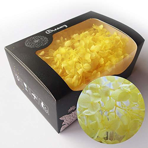 アジサイ・ヘッド 黄色 約20g プリザーブドフラワー イエロー(c) 花材 レジン パーツ クラフト あじさい 黄色 アクセサリー ハーバリウム用