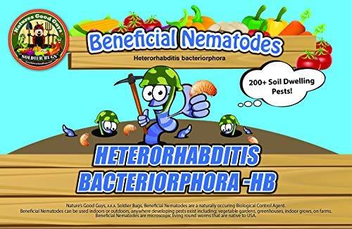 NaturesGoodGuys Beneficial Nematodes Heterohabditis bacteriophora HB -Ships from USA (25 Million)