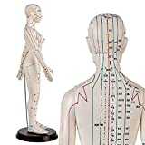 WJH Mujer Modelo de la acupuntura - Modelo de la acupuntura - Medicina China acupuntura Modelo Anatomía Humana, de 60 cm de Altura