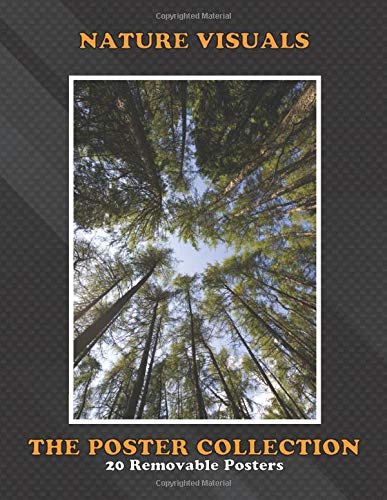 Poster Collection: Nature Visuals Forest Of Tall Pines Vintage Posters