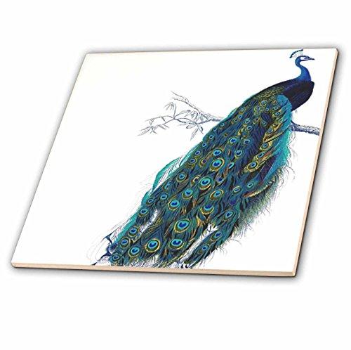 3dRose Inspirationzstore vintage Art–vintage Peacock Art–blu e verde elegante elegante uccello su ramo Beautiful Tail Feathers–bianco–piastrelle