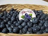 長野県産 生産農家直送 生ブルーベリー(生食or加工向き) 約500g入り/箱