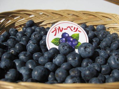 長野県産 生産農家直送 生ブルーベリー(生食or加工向き) 約500g入り/箱 2021年産は7月上旬頃から発送予定(気象状況と生育状況により前後します)