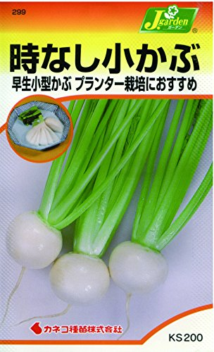 カネコ種苗 野菜タネハイクオリティ299 時なし子かぶ ゆたか2号 10袋セット