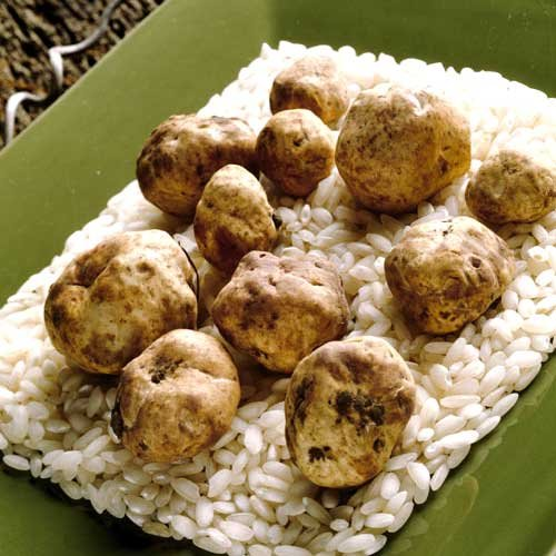 Fresh Flash-Frozen Alba White Truffles - 1 x 1 lb