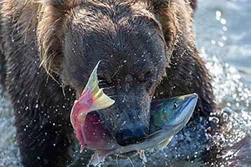 HJZS Rompecabezas de 1000 Piezas para Adultos Oso Animal Comiendo Pescado Juegos de Rompecabezas para la Familia, Juegos educativos, Rompecabezas para niños