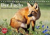 Der Fuchs. Bezaubernder Geselle (Tischkalender 2022 DIN A5 quer): Froehliche Rotfuechse beim vergnuegten Spiel mit Hunden (Geburtstagskalender, 14 Seiten )