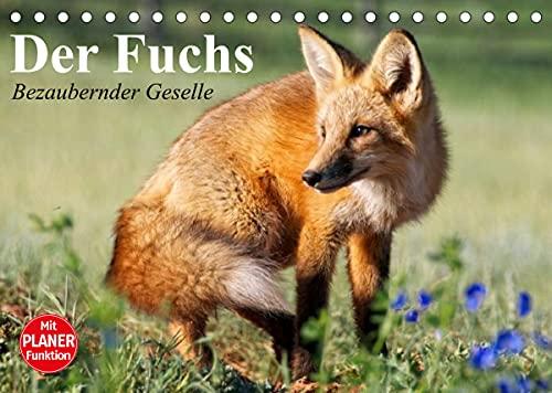Der Fuchs. Bezaubernder Geselle (Tischkalender 2022 DIN A5 quer): Fröhliche Rotfüchse beim vergnügten Spiel mit Hunden (Geburtstagskalender, 14 Seiten ) (CALVENDO Tiere)