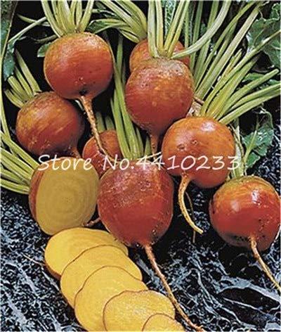 Bloom Green Co. 200pcs cerise Radis Bonsai, la couleur rouge Radis Mix chinois Fruits légumes arc-en-soins biologiques Radis Bonsai Seedsplant: 10