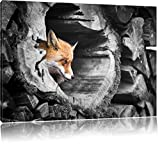 schöner Fuchs im Baumstamm schwarz/weiß Format: 120x80