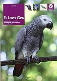El loro gris (Animales)