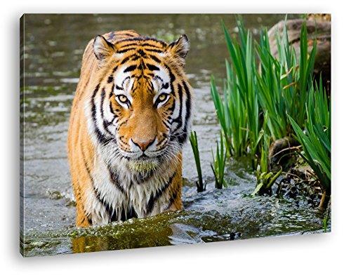 deyoli anmutiger Tiger im Wasser Format: 120x80 als Leinwandbild, Motiv fertig gerahmt auf Echtholzrahmen, Hochwertiger Digitaldruck mit Rahmen, Kein Poster oder Plakat