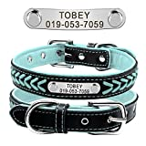 Dogs Collars Review and Comparison