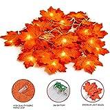 TOLIANCLE 20 Stück Herbstgirlande,Ahornblatt Lichterketten,herbstdekoration Garland für Erntedankfest Herbstdeko Hochzeit Dekoration Weihnachtsbeleuchtung