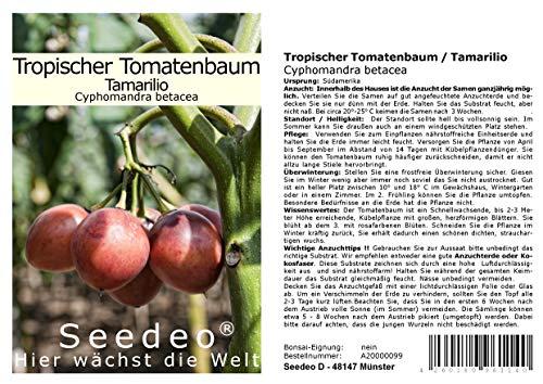 Seedeo Tropischer Tomatenbaum/Tamarillo (Cyphomandra betacea) 40 Samen