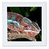 3dRose Regenbogen Panther Chameleon,