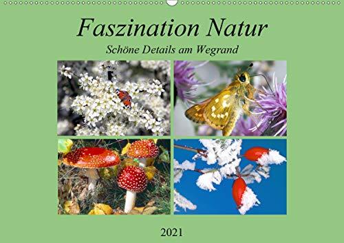 Faszination Natur - Schöne Details am Wegrand (Wandkalender 2021 DIN A2 quer)