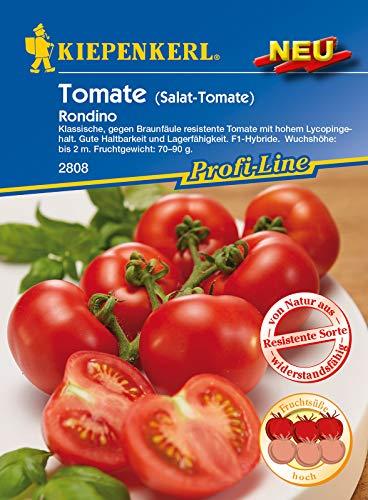 Salat-Tomate Rondino F1, gegen Braunfäule resistente Tomate mit hohem Lycopingehalt, haltbar und lagerfähig