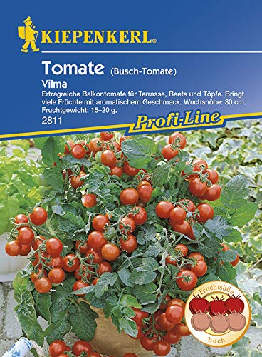Tomatensamen - Tomate Vilma von Kiepenkerl