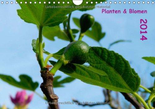 Planten & Blomen 2014 (Wandkalender 2014 DIN A4 quer): Gartenmotive begleiten durch das Kalenderjahr! (Monatskalender, 14 Seiten)