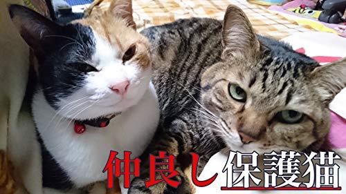 [画像:【保護猫】今は幸せにゃ〜猫の写真集 【Kindle版】]