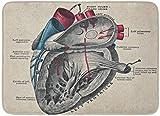 Rongpona Alfombrilla de baño Anatomía Vintage Diagrama de corazón anatómico Biología Ciencias Decoración de baño Alfombra