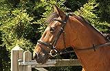 Windsor Equestrian <span class='highlight'>Horse</span>s Comfort Bridle Havanah Full