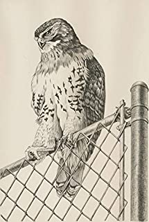Sulis Fine Art Gary R. Low - 1980 Lithograph, Study of a Red Tailed Hawk