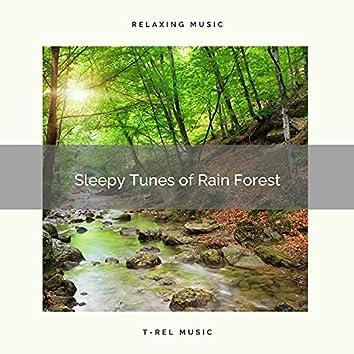 1 Sleepy Tunes of Rain Forest