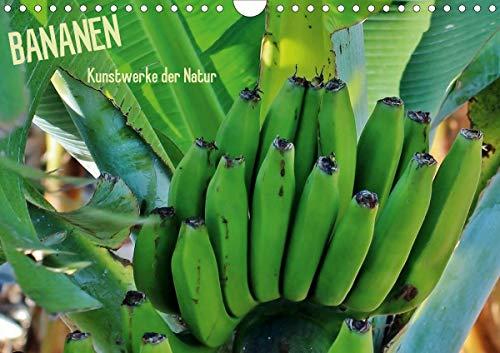 Bananen (Wandkalender 2021 DIN A4 quer)