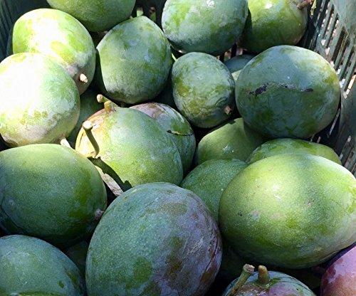 マウンテンフード『メキシコ産オーガニックアップルマンゴー』