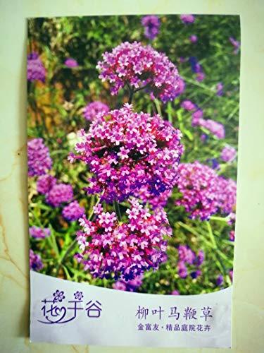 HONIC 500pcs / Bag Weide Verbene Pflanze vergossen Blume professionelle Verpackung Boutique Gartenblume für Hausgarten