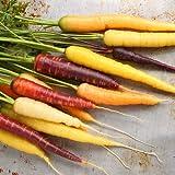 Möhren Karotten Rainbow F1 125 x Samen hohe Keimfähigkeit