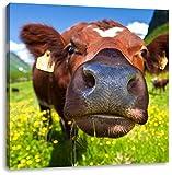 Pixxprint Alpen Kuh auf Bergwiese als Leinwandbild | Größe: 70x70 cm | Wandbild | Kunstdruck | fertig bespannt