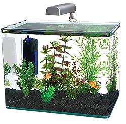 The 4 Best 10 Gallon Fish Tanks For Bettas Betta Care Fish Guide