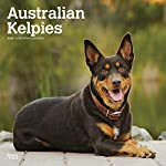 Australian Kelpies 2020 12 x 12 Inch Monthly Square Wall Calendar, Animal Dog Breeds (English, Spanish and French Edition)