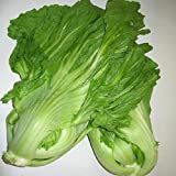 200_GAI Choy,GAI Choi, Chinese Indian Mustard,Cabbage_Seeds