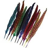 10x Vogelfedern vom Fasan Fasanenfedern Vogelfeder Hutfeder 10 Farben Schmuck Deko 25-30CM