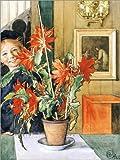 Poster 30 x 40 cm: Britas Kaktus, 1904 von Carl