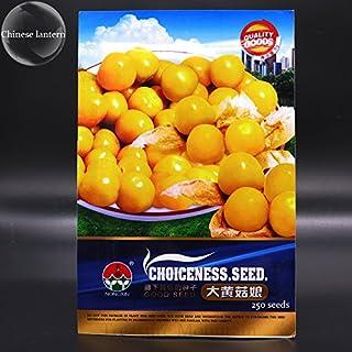 Herencia Physalis alkekengi semillas amarillas de la linterna china de vejiga cereza fruta grande, paquete original, 250 semillas, cereza de invierno